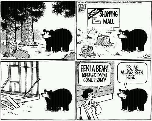 eeek-a-bear