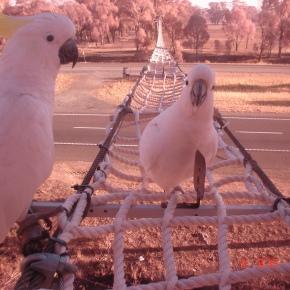 Other wildlife braving thebridges