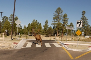Teaching wildlife road-crossing tricks