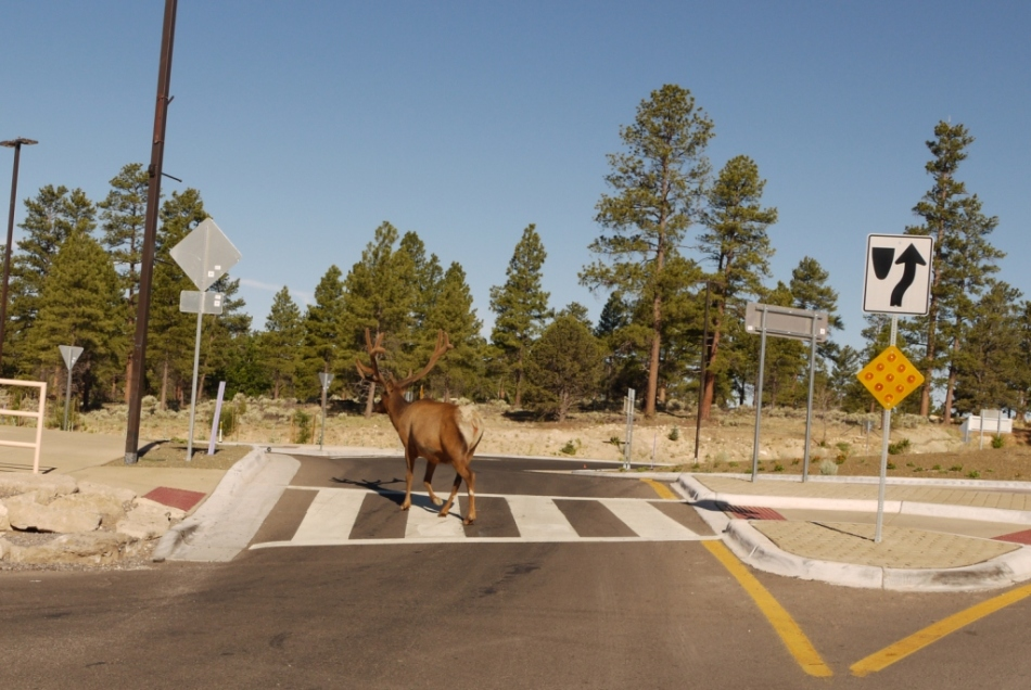 ksoanes_deer crossing