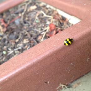 Ladybird ladybird…