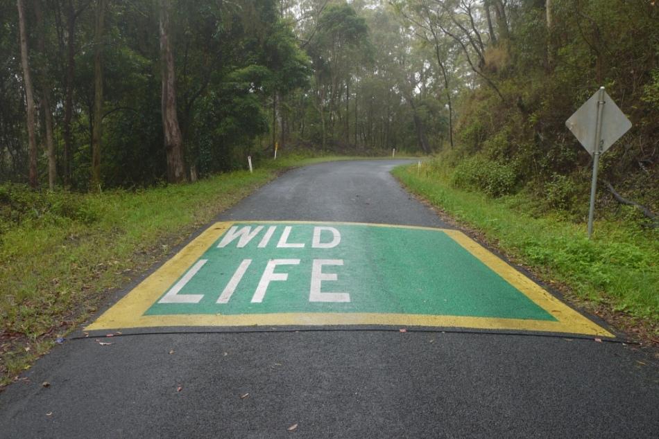 ksoanes_wildlife-crossing