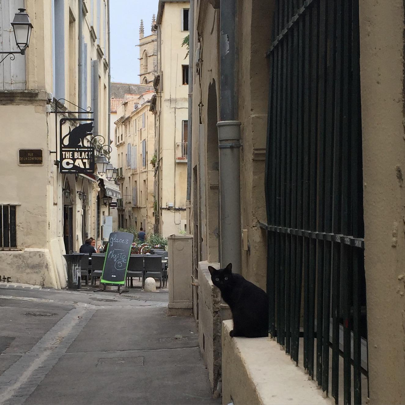 le chat noir_ksoanes